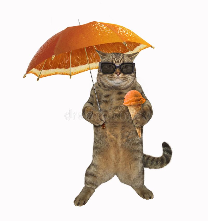 Cat with umbrella 3 stock photography