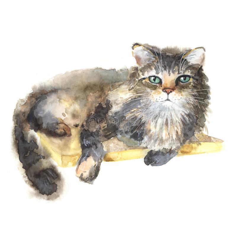 Big cat. Watercolor portrait of a lying cat. Relaxed cat royalty free stock image