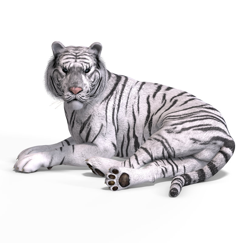 Big Cat White Tiger. Dangerous Big Cat White Tiger With Clipping Path Over White royalty free illustration