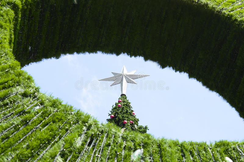 Big Christmas tree. Background of blue sky royalty free stock photos
