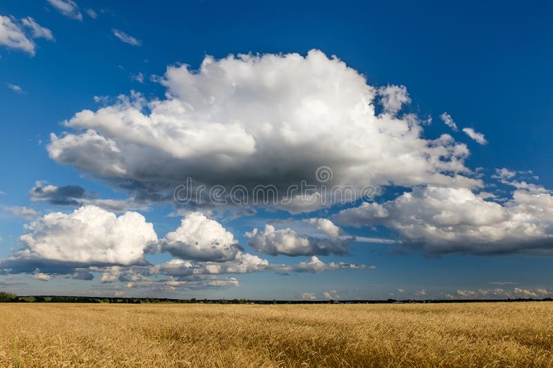 A cloud in the sky over a field of cereals. A big cloud in the sky over a field with ripe cereals stock photo