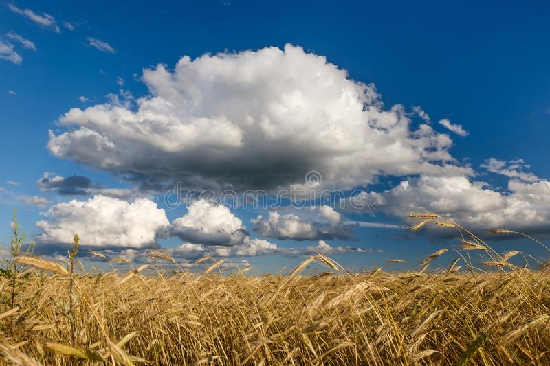 A cloud in the sky over a field of cereals. A big cloud in the sky over a field with ripe cereals stock image
