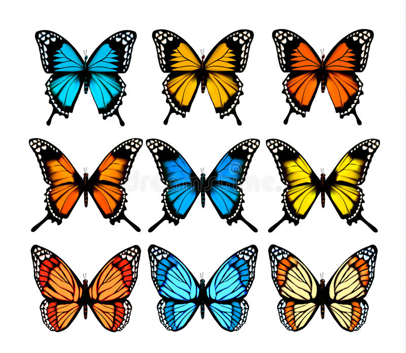 Big collection of colorful butterflies. stock illustration