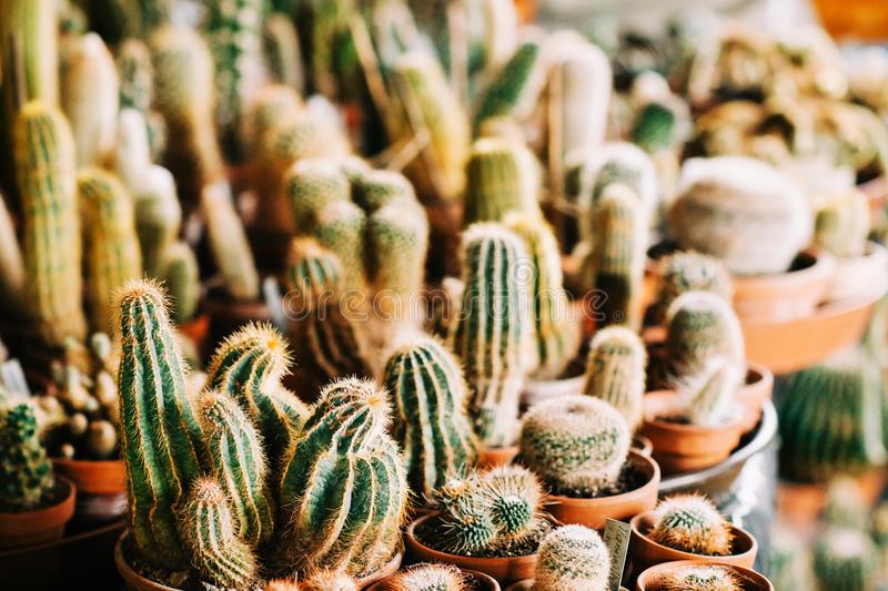 Big collection of different kind potted cactus stock photos