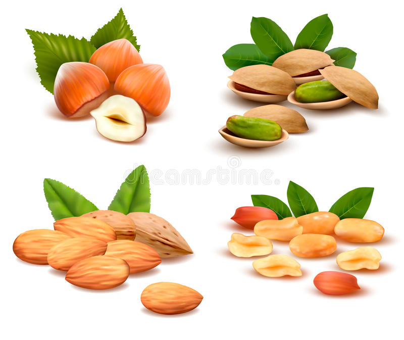 Big Collection Of Ripe Nuts  Vector Royalty Free Stock Images
