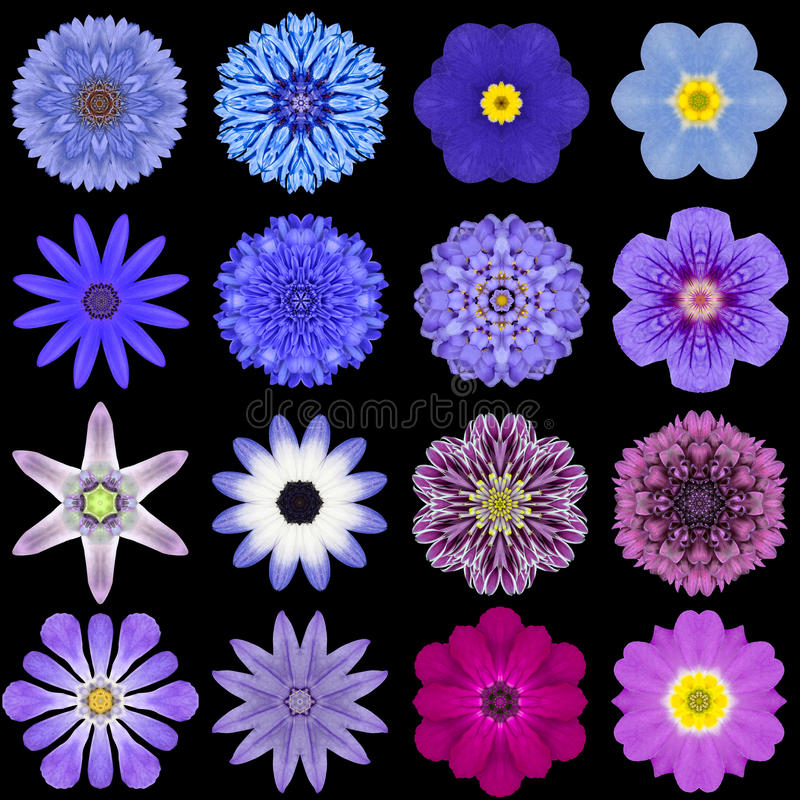 Big Collection of Various Blue Pattern Flowers Isolated on Black stock photography