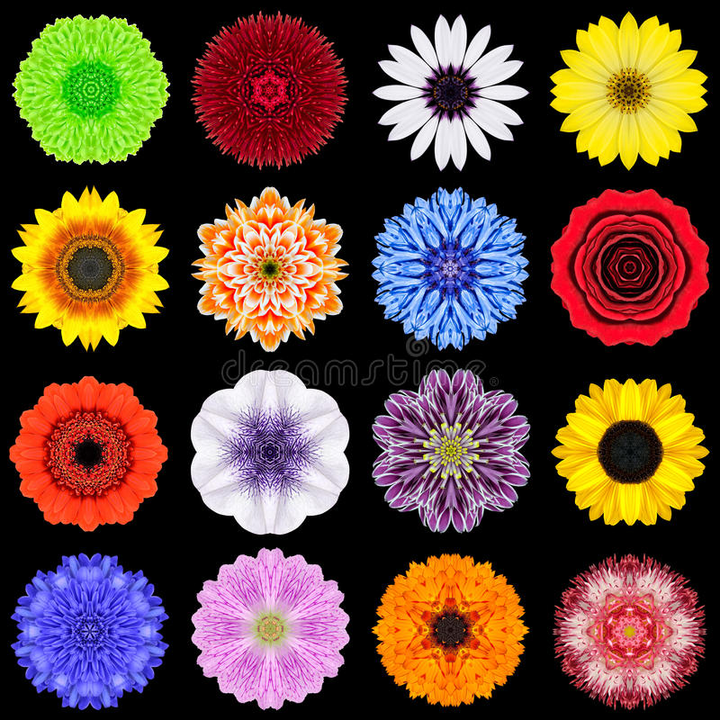 Big Collection of Various Colorful Pattern Flowers Isolated on Black stock image