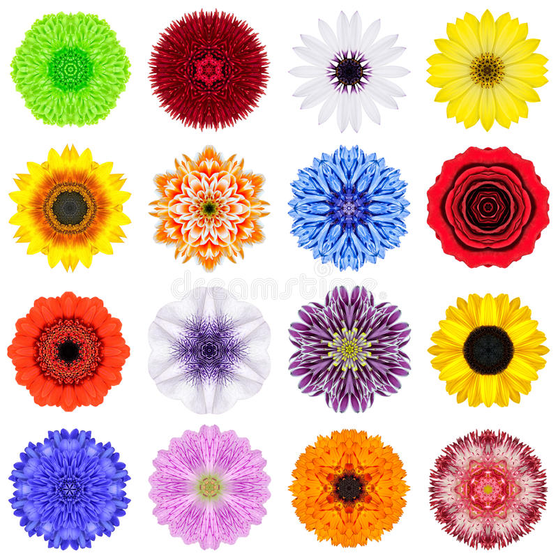 Big Collection of Various Concentric Flowers Isolated on White stock photo