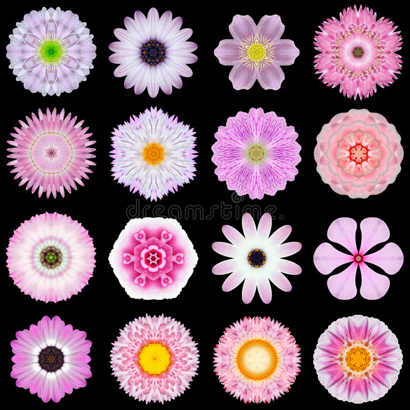 Big Collection of Various Pink Pattern Flowers Isolated on Black stock photos
