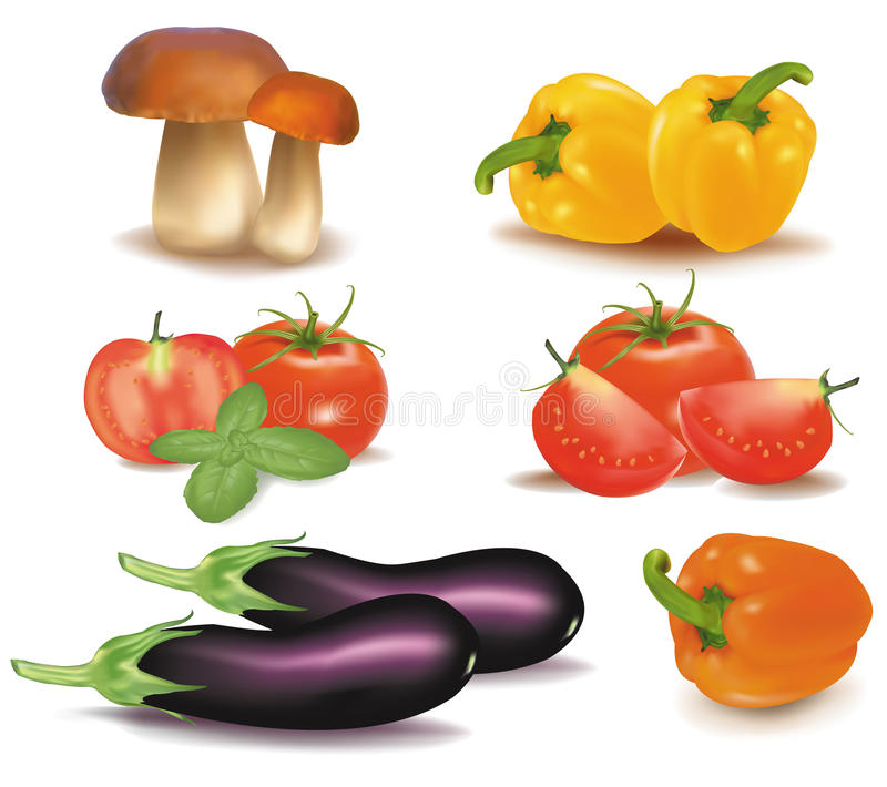The big colorful group of vegetables. Photo-realistic stock illustration