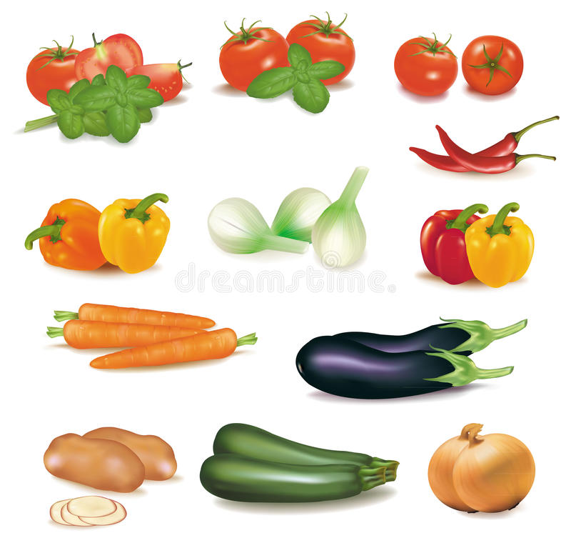 The big colorful group of vegetables. vector illustration