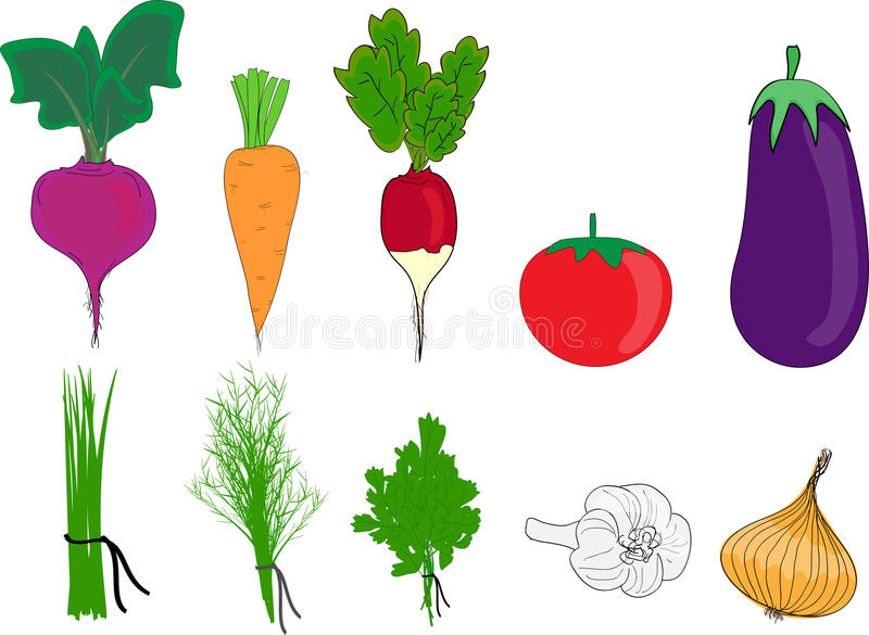 The big colorful group of vegetables vector illustration