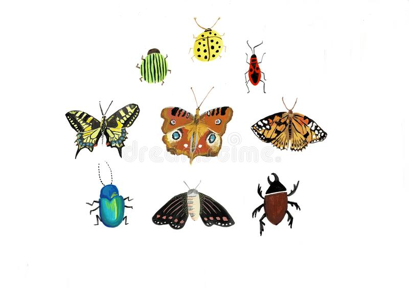 Big colorful hand drawn doodle set with insects. Beetle, butterfly, moth, worm collection in outline style. Isolated on vector illustration