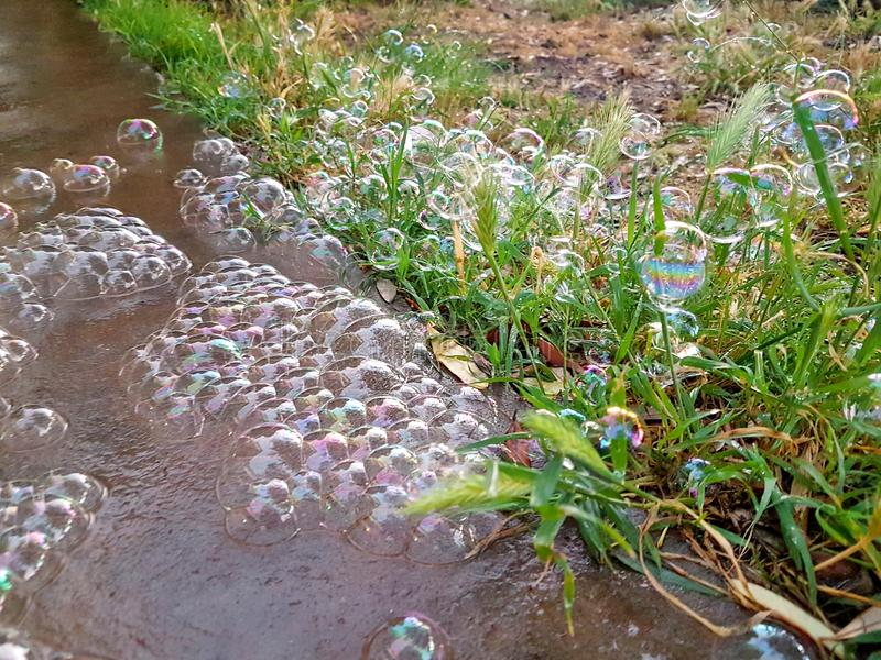 Big colorful soap bubbles in nature. Many bubbles soap on floor of garden outdoor, beautiful natural environment. royalty free stock photo