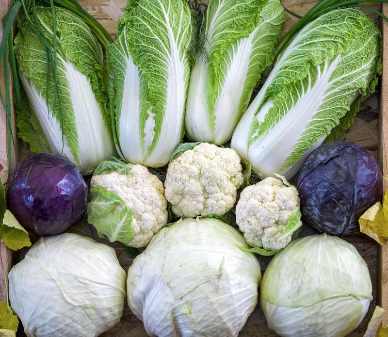 Composition from different varieties of cabbage on wooden background royalty free stock photography