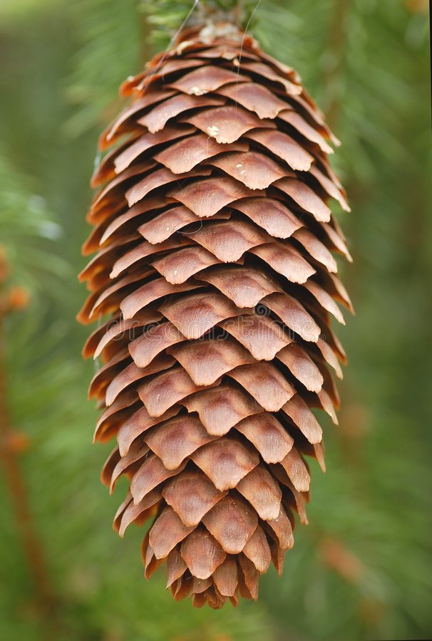 Download Big Cone Stock Photography - Image: 5686472