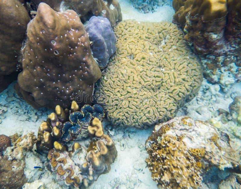 Big coral brain with big in sea stock image
