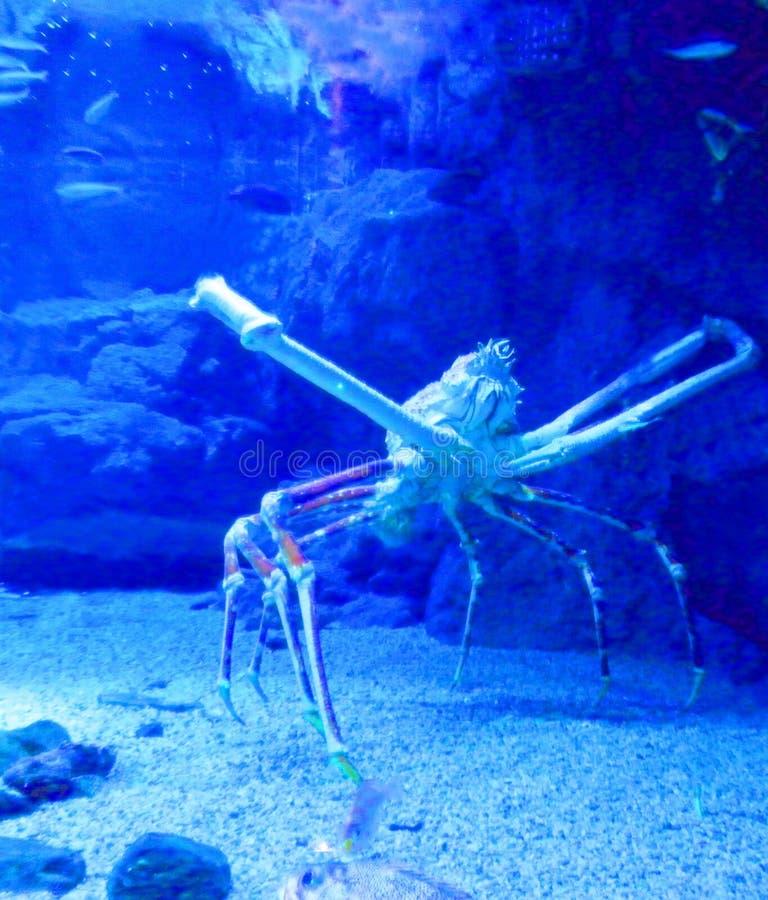 Big Crab in Aquarium stock photos