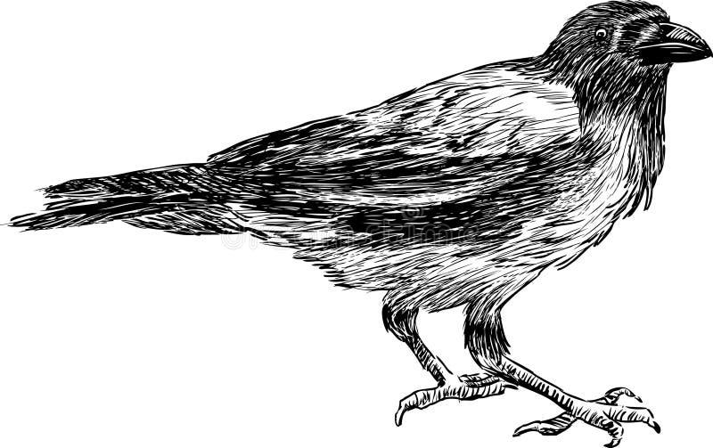 Big crow vector illustration