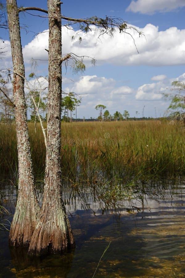 Big Cypress National Preserve. Scenic Big Cypress National Preserve, Florida Everglades stock photo