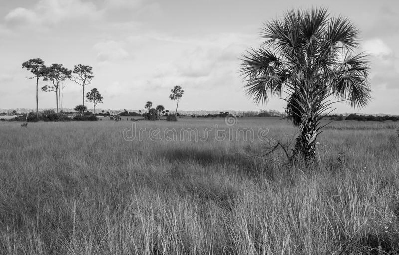Big Cypress National Preserve royalty free stock images