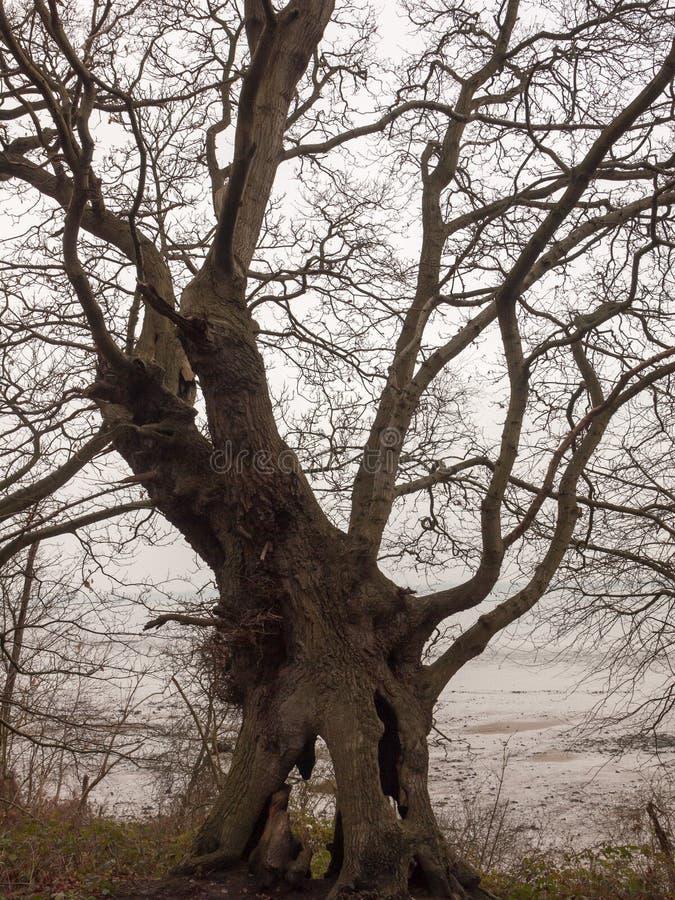 big dark bare branch tree autumn overcast moody death stock photo