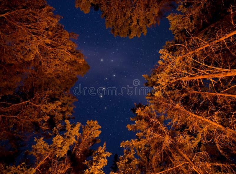 Big Dipper Visible Through Orange Lit Trees royalty free stock images