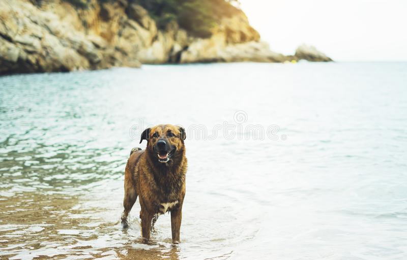 Big dog is swimming in the sea on a background of water in nature on the coast in summer enjoying life, animal in wave ocean royalty free stock photo