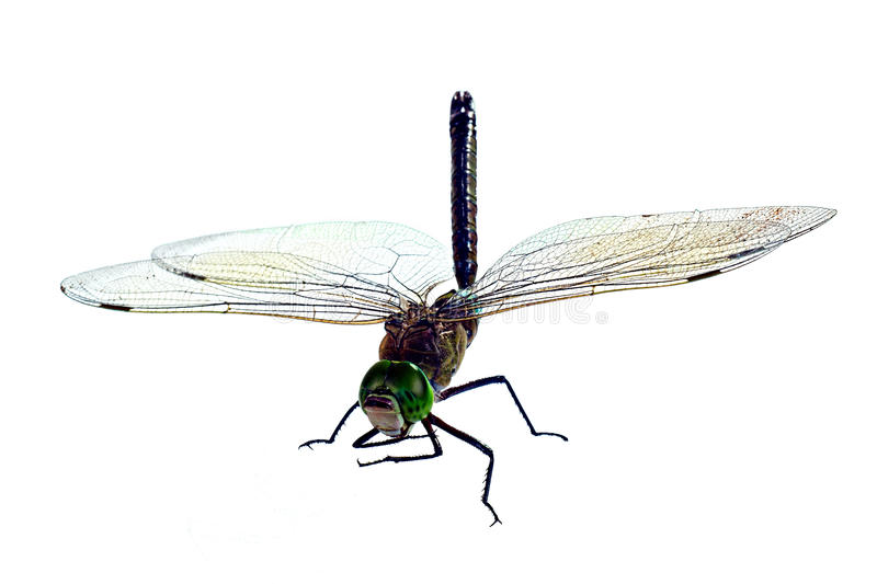 The big dragonfly, isolated on a white background stock image