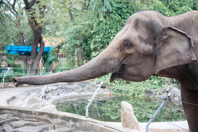 Big Elephant Stock Image