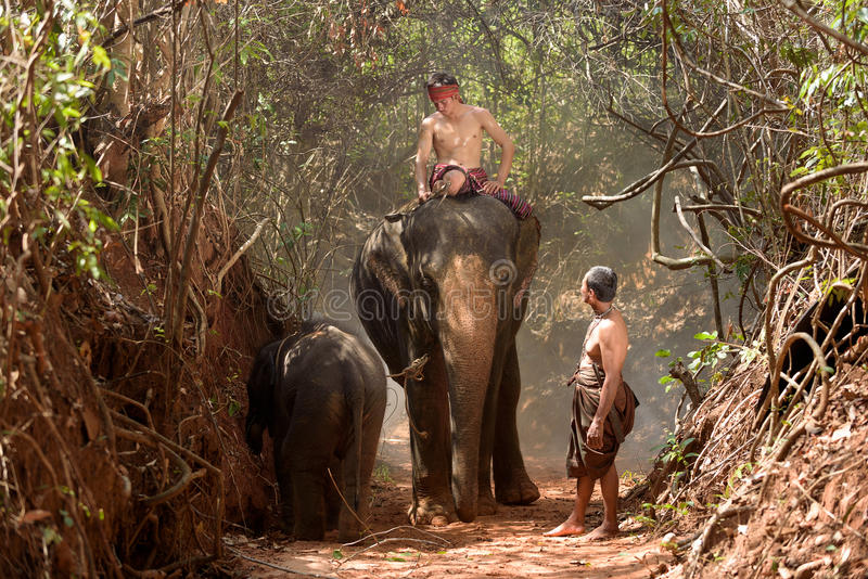 Big elephant and baby walking in the jungle stock images