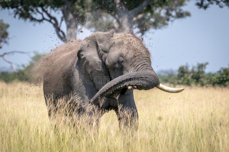 Big Elephant bull taking a dust bath. Big Elephant bull taking a dust bath in the Chobe National Park, Botswana stock photos