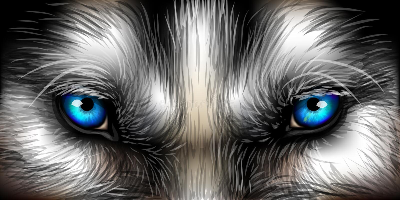 Big eyes. Siberian Husky bright blue eyes close up royalty free illustration