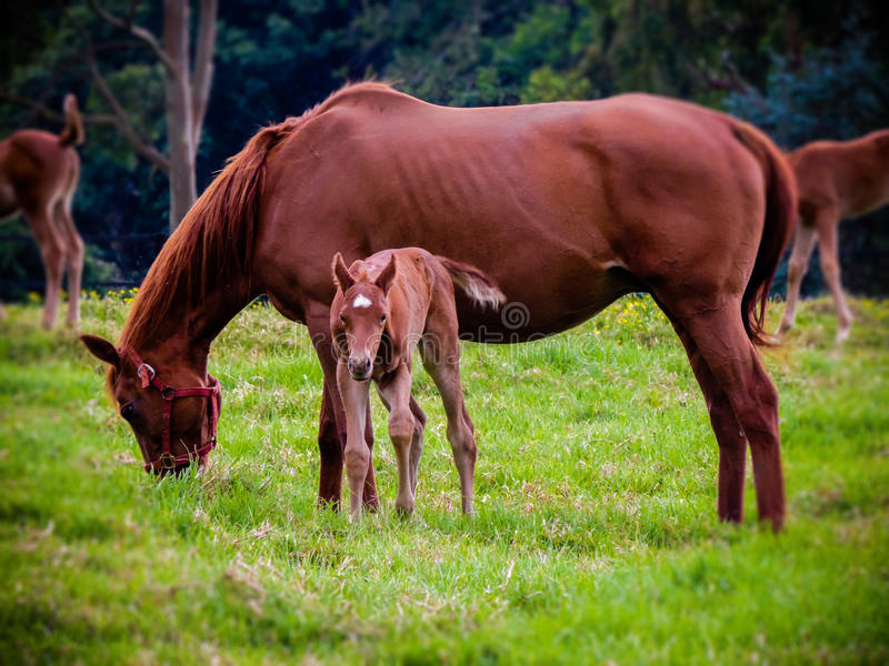A big family of horses royalty free stock images