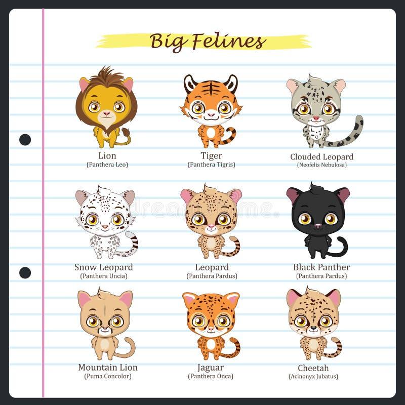 Big feline illustrations with regular and scientific names. Big feline illustrations - regular and scientific names stock illustration