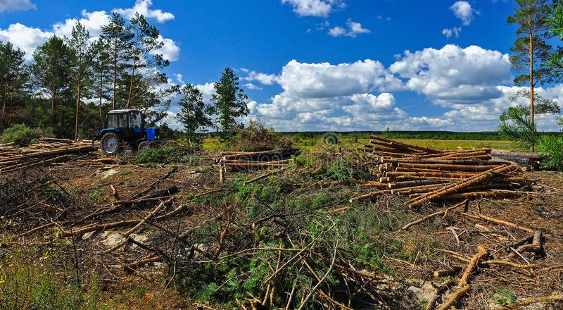 Big felling of the forest. Cut trees lie on the ground next to the tractor on the background of the blue sky. Ecology. Wood as a source renewable energy stock photography