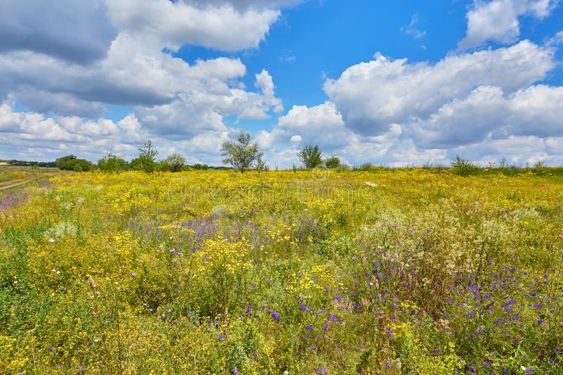 Big field of flowers on sunrise in mountain valley. stock photography