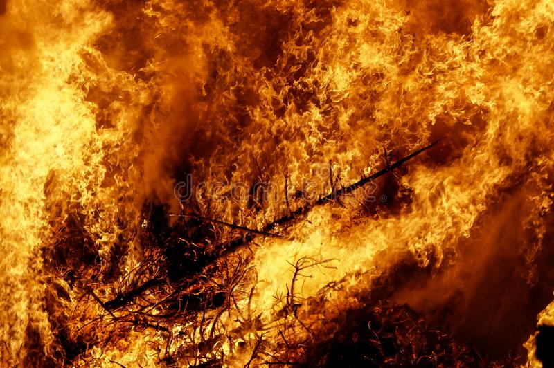 Big fire in the woods stock photo