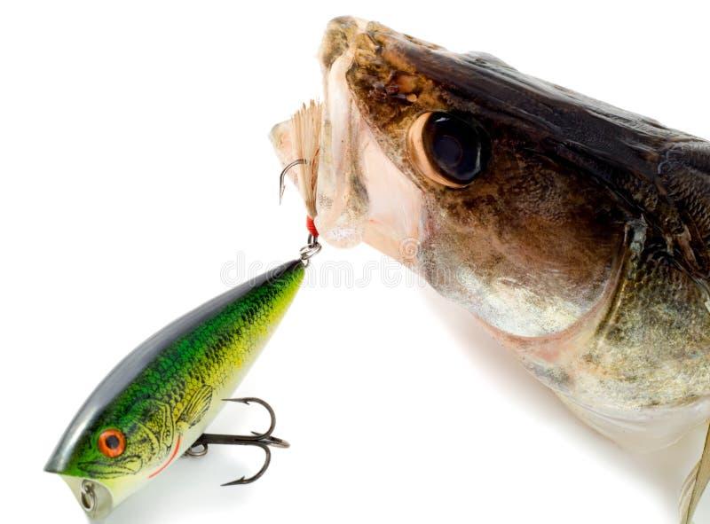 Download Big fish stock image. Image of catching, hook, animal - 8125431