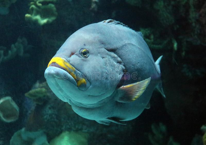 Tropical fish in aquarium at ocean, sea salt creature royalty free stock images
