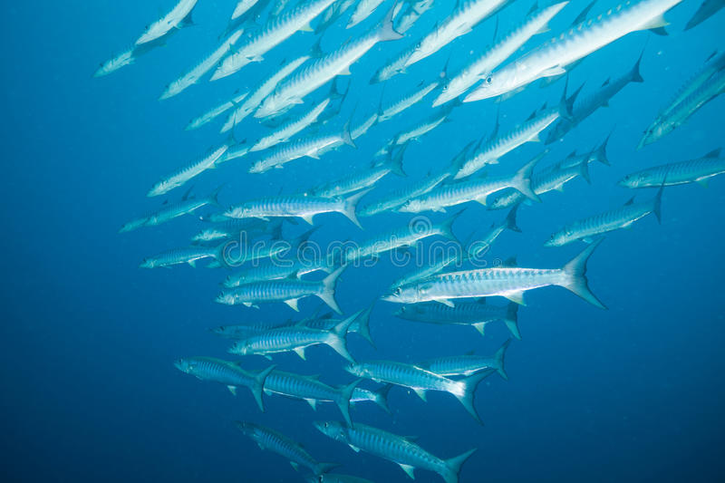 Big fish in big water stock photography