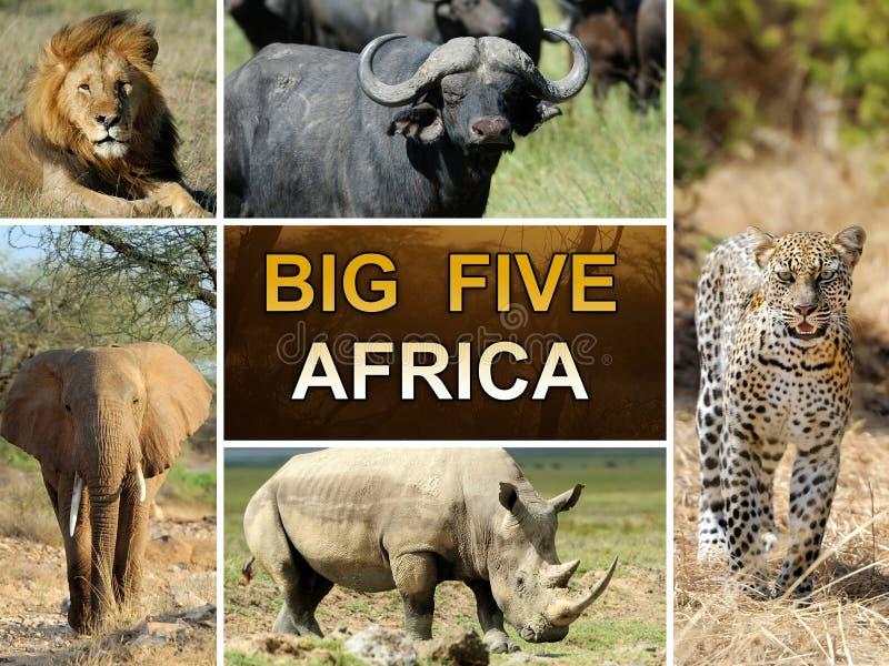 the big five stock image image of natural leopard feline 38862123. Black Bedroom Furniture Sets. Home Design Ideas