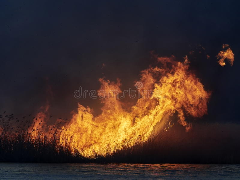 Big flames on field during fire stock photo