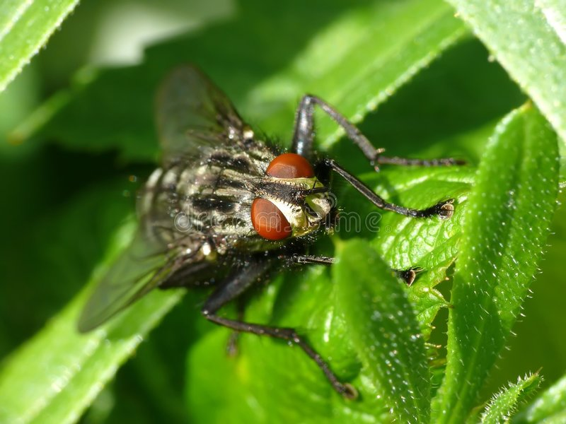 Big fly. On grass closeup royalty free stock photo