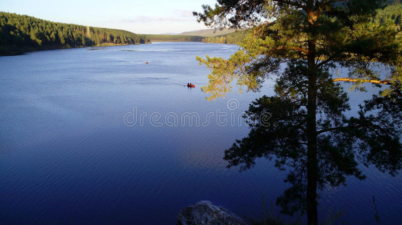 Big forest lake stock photography