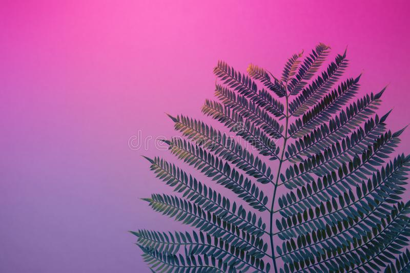 Big fresh fern leaf on duotone purple violet blue background. Trendy neon colors. Toned. Minimalist style. Contemporary unique. Creative image poster streamer stock image