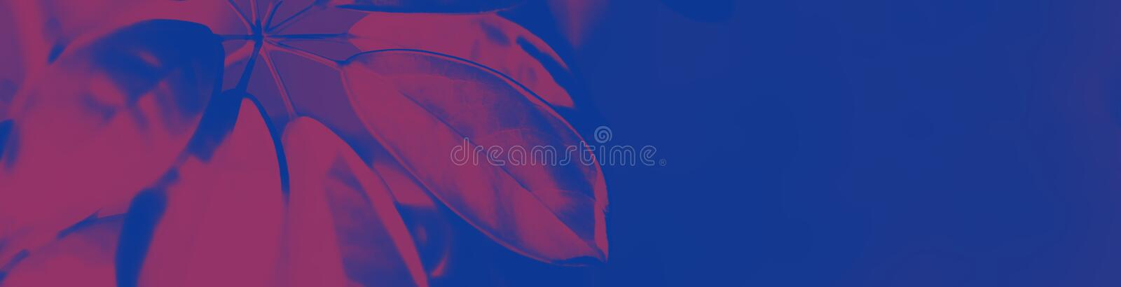 Big fresh leaf on duotone purple violet blue background. Trendy neon colors. Toned. Minimalist style.  stock photography