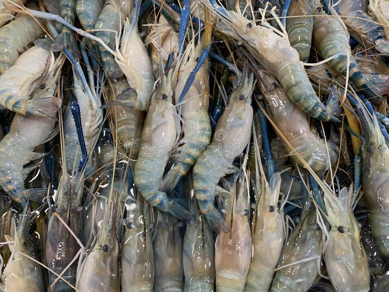 Big fresh river prawns on ice royalty free stock photo