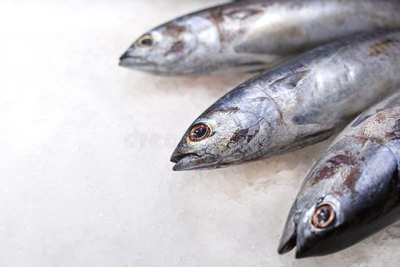 Big fresh whole raw tuna fish on the ice. Traditional premium seafood. royalty free stock photo