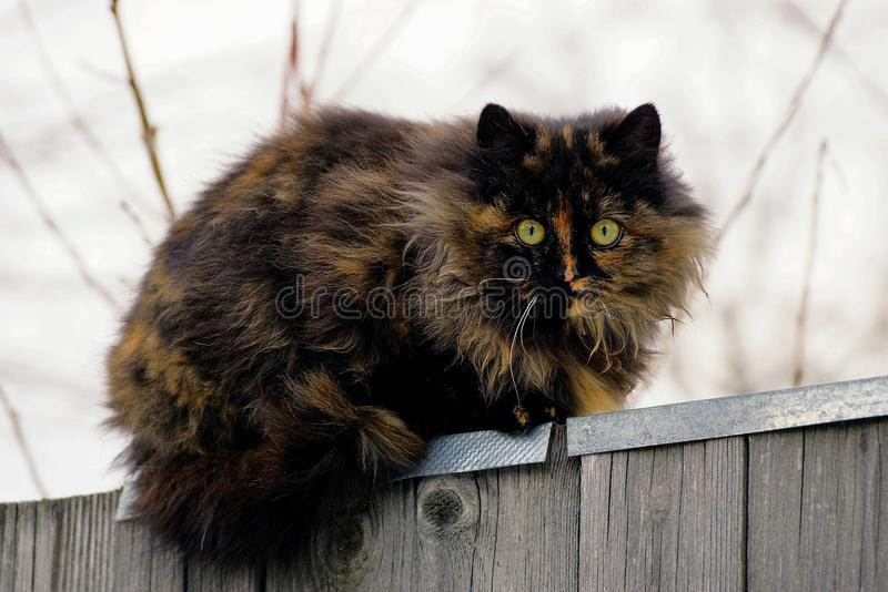Big furry spotted cat on a wooden fence. Beautiful fluffy cat sitting on a fence in the street stock image
